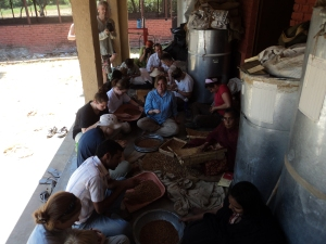 Seed sorting at Navdanya's seed bank with Saint Michael's College study tour