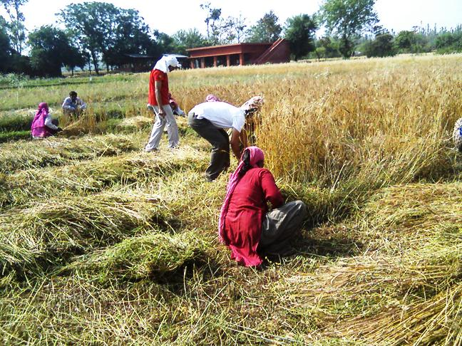 Navdanya's farm., Dehradun