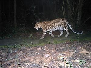 leopard blog